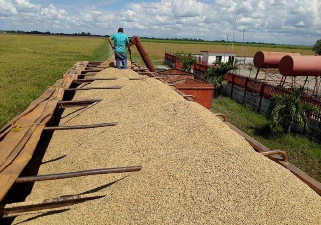 a importación de maquinaria y semillas en rubros que no se producen en Venezuela ha sido boicoteado por el bloqueo de Washington a la economía. Foto: Archivo Misión Verdad