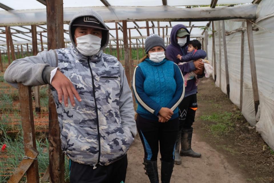 Todavía hay más de 300 trabajadores golondrina en seis provincias del país que esperan autorizaciones para viajar a sus hogares.