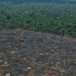 Brasil. Greenpeace denuncia la importación española de carne procedente de la deforestación de la Amazonia