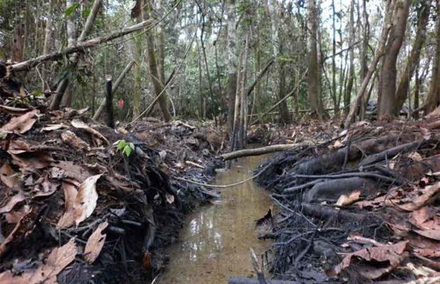 Ecuador. Pueblos originarios firmes contra el extractivismo en la Amazonía