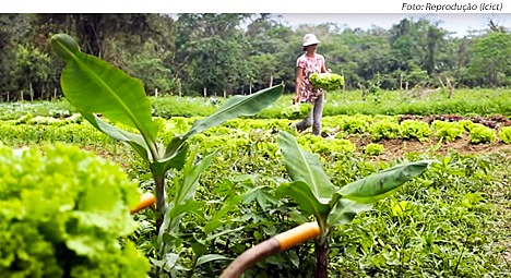 Brasil. Agronegocios: especuladores internacionales o alimentación saludable