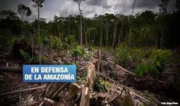 Nación Mapuche. Tamshiyacu: Piden confirmar sentencia contra empresa que deforestó bosques en Loreto