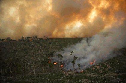 Brasil. Marcado a fuego