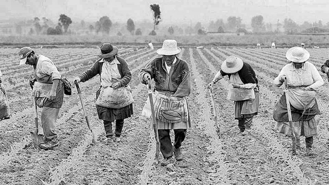 campo-campesinos-indígenas-agricultura-familiar