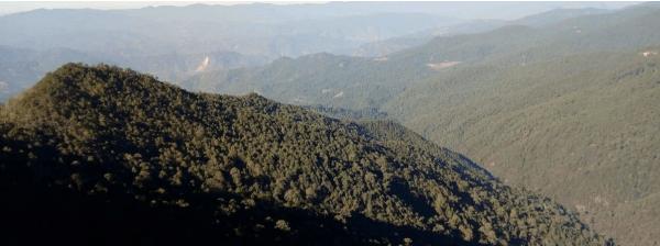 México. ¿Qué sucede cuando a las comunidades se les reconoce derechos sobre los bosques?