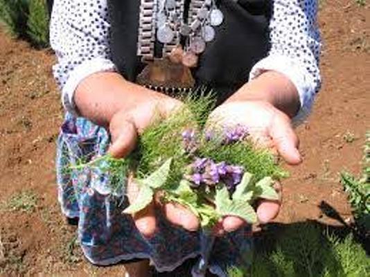 Nación Mapuche. Los protocolos de medicina intercultural no se cumplen