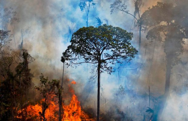 Ecología Social. Abogados internacionales redactan un plan para criminalizar la destrucción de ecosistemas