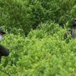 Estados Unidos. Reconoce el fracaso del «Plan Colombia» para erradicar drogas