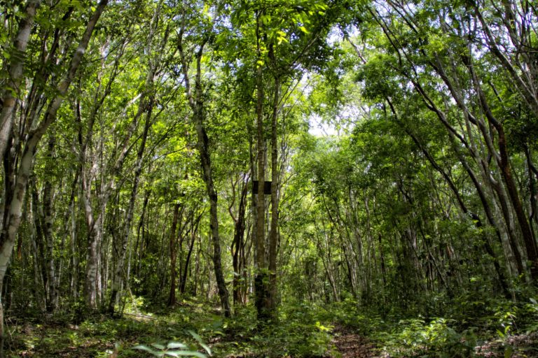 Acahuales en el ejido Nuevo Becal, Campeche