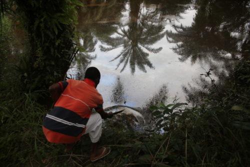 Ecología Social. Shell condenada tras 13 años de litigio por contaminar el delta del Níger