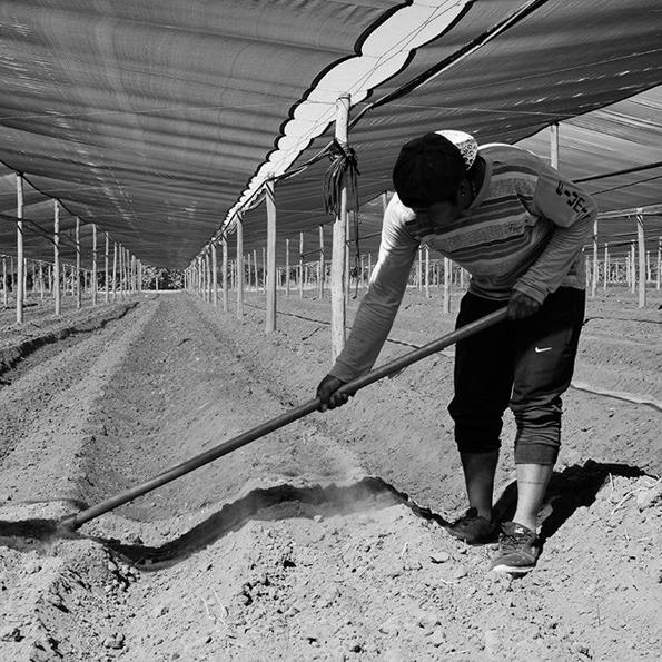 campo-trabajo-productores-tierra