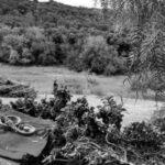 Argentina. Ecofeminismos en Sierras Chicas: del fuego, brotarán redes