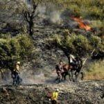 Palestina. Colonos y terroristas sionistas incendian decenas de olivos cerca de Belén / También queman sistema eléctrico y depósito de agua de Asira Al Qibliya en Cisjordania ocupada