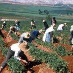 Ecología Social. El cambio climático ha afectado la productividad agrícola global