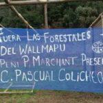 Nación Mapuche. Comunidad Pascual Colicheo recupera territorio donde esta instalada la empresa forestal Mininco