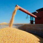 Ecología social. La iniciativa 200 millones de toneladas de granos para 2030: la destrucción de los suelos como salida a la crisis