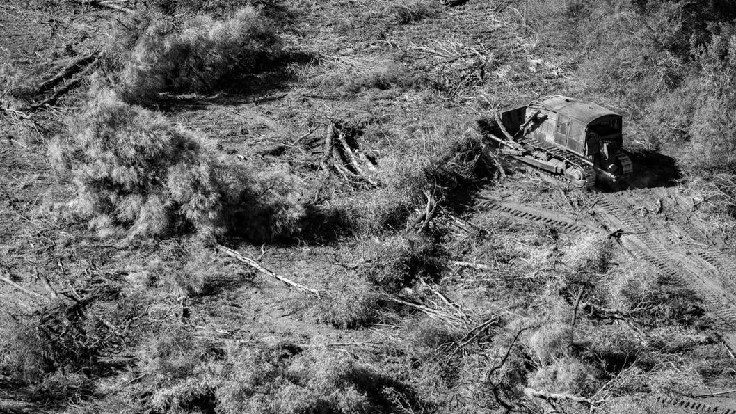 chaco-desmonte-bosque