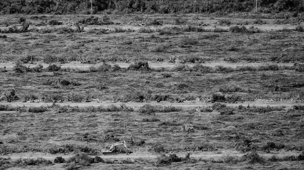 chaco-desmonte-bosque-2