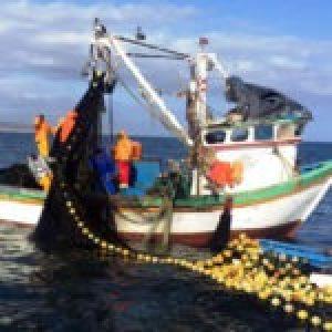 """Chile. Pescadores artesanales: """"Necesitamos el apoyo urgente del gobierno, la crisis que viene es dramática"""""""
