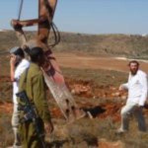 Palestina. Colonos judíos israelíes ocupa tierras de cultivo palestinas en Yenín