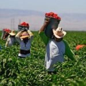 México. La ruta hacia el nuevo mundo posible