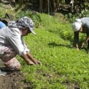 Brasil. Covid-19 avanza tierra adentro y amenaza a la población más vulnerable