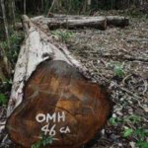 Brasil. La deforestación de la Amazonía en abril de 2020 es la más alta en diez años