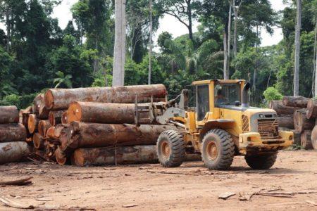 La deforestación en la Amazonía en abril de 2020 es la más alta registrada en diez años. – La otra Andalucía
