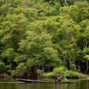 Colombia. Amazonas: 190 contagios por cada diez mil personas.