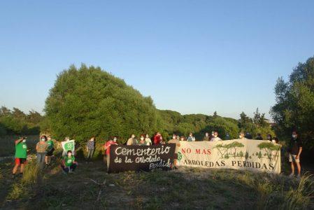 Pretenden construir 1.260 viviendas en uno de los mejores bosques de la Bahía de Cádiz – La otra Andalucía