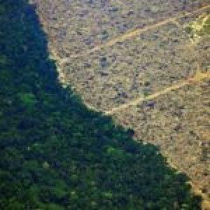 Brasil. La degradación ambiental es el tema del Foro Popular de la Naturaleza que comienza este lunes