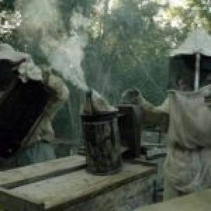 México. La lucha de los apicultores mayas contra Monsanto