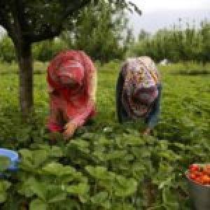 Migrantes. Huelva: Denuncian en la ONU la vulneración de derechos de las trabajadoras de la fresa
