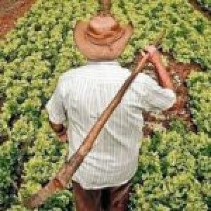 Brasil. MST presenta plan de Reforma Agraria Popular para superar crisis social y económica