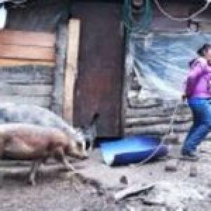 Nacion Mapuche. Bariloche: La historia de la Lof José Celestino Quijada