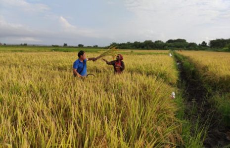 China. Crece la seguridad alimentaria