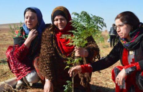 Feminismos. Texto completo de la Ley de la Mujer en el norte y el este de Siria