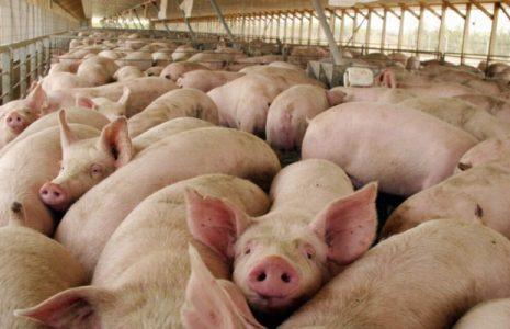 Argentina. Ante la postergación de la firma del memorándum con China por las megafactorías porcinas