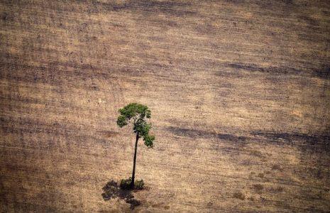 Brasil. La agroindustria es la principal causa de conflictos en la Amazonía