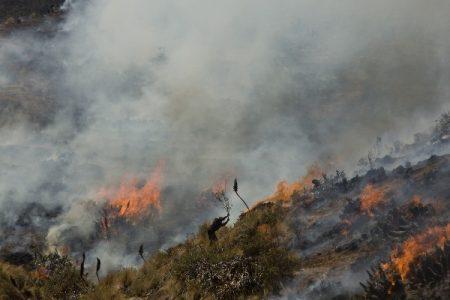 Perú. El fuego de muerte y destrucción en los bosques