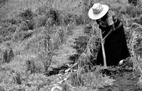 Argentina. La agricultura campesina produce el 70% de los alimentos con el 25% de la tierra