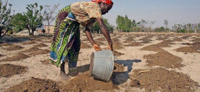 Ecología Social. Aumenta amenaza del cambio climático sobre África