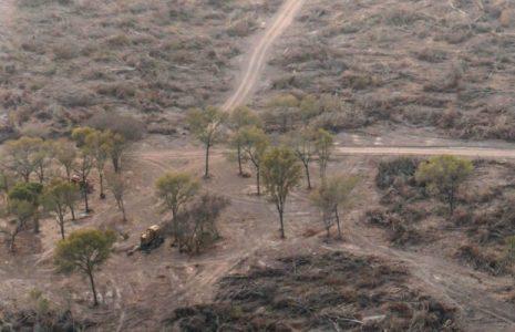 Argentina. Durante la cuarentena se deforestaron casi 50.000 hectáreas