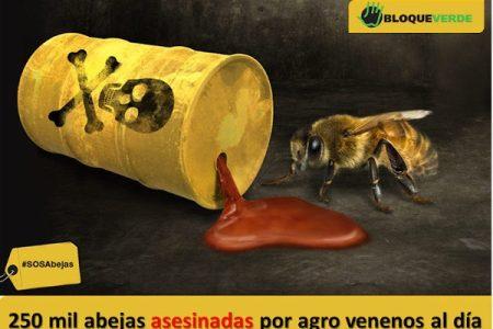 Costa Rica. Apicultores denuncian que los agroquímicos están matando 250 mil abejas cada día