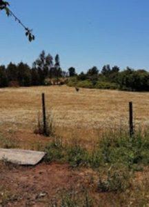 Nación Mapuche. Ante operaciones de espionaje electrónico en Temucuicui