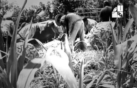El Salvador. El fracaso de la reforma agraria fue un patrocinio de los sindicatos estadounidenses