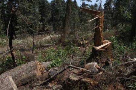 México. Campesinos de Guerrero piden ayuda contra la tala ilegal