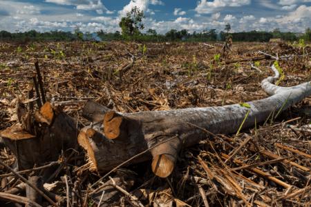 Perú. Se está perdiendo la Amazonía