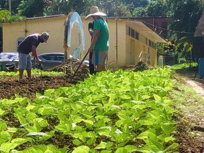 Puerto Rico. Comunidad Cacao en Orocovis comienza proyecto «Pedagogía de la Tierra»