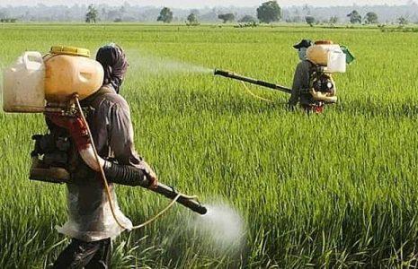 Brasil. El gobierno de Rio Grande do Sul quiere liberar pesticidas prohibidos con la urgencia como excusa